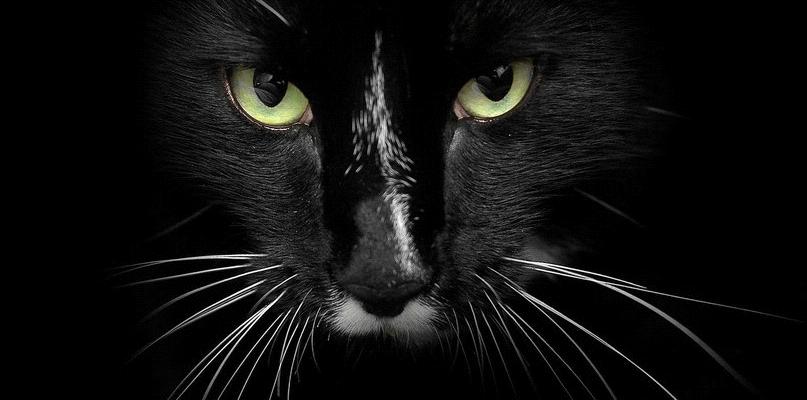 Черная кошка в темной комнате, которая там есть